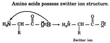 5 Amino acids possess zwitter ion 2