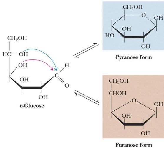 5 D Glucose pyranose Furanose form