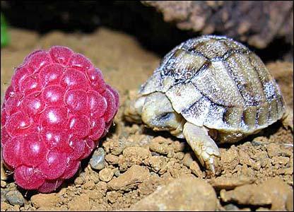 5 rare turtle