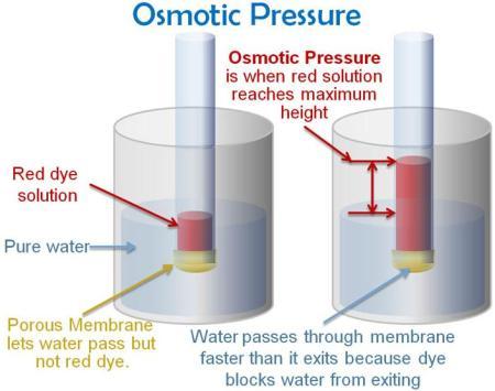 51b osmotic pressure