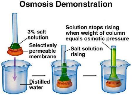 51c osmotic pressure