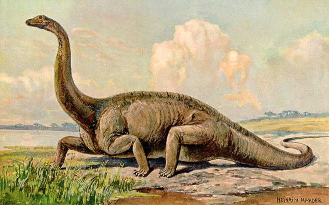 6 diplodocus
