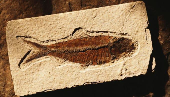 7 fossil fish