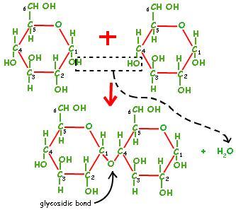 7 Glycosidic bond formation