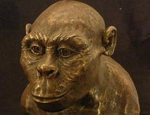 8 Austrolopithecus africanus