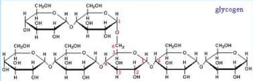 8 Glycogen