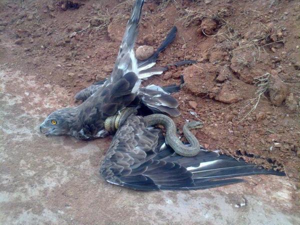 8 rare bird crawling