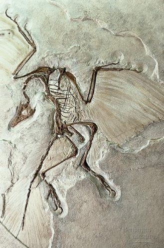 9 fossil