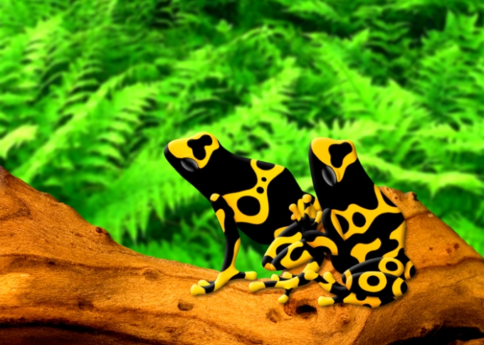 bumblebee poison frogs yellow black