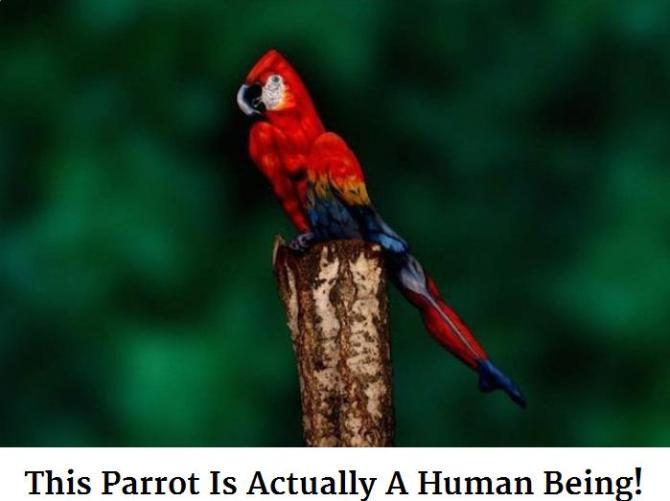 parrot human