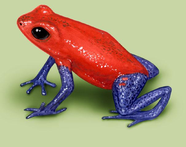 red body blue leg frog