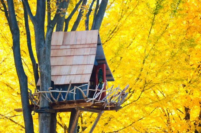 Sarrounded by Yellow flower treehouse