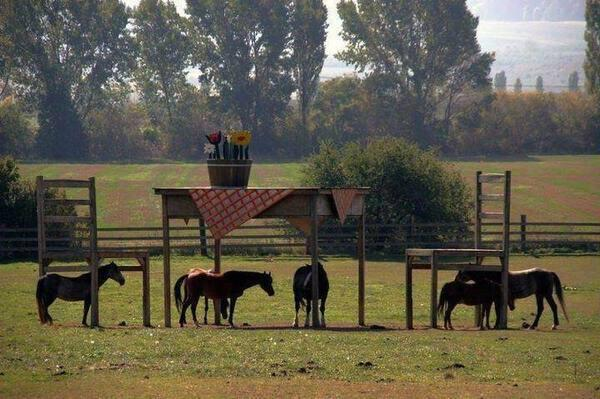 Table chair as shelter for horses