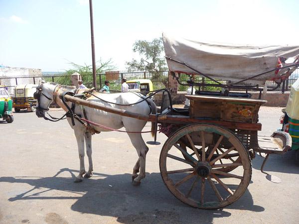 Tonga-1 Horse cart