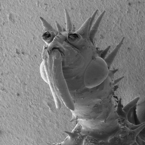 1 Beautiful bed skin bug