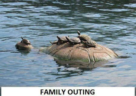 1 Family Outing Tortoise