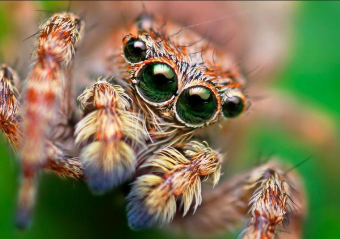 1 My spider your spider beautiful