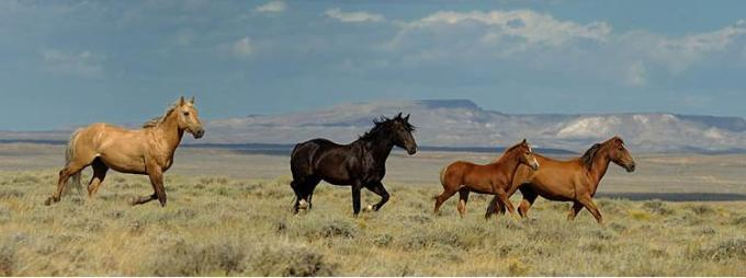 1 These are wild horses