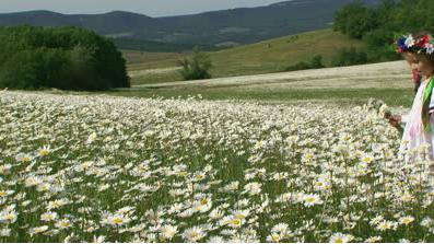 1 Valley of white flowers