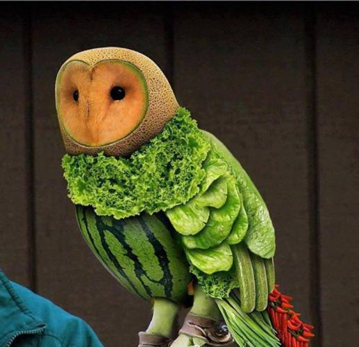 1 Vegetable Owl
