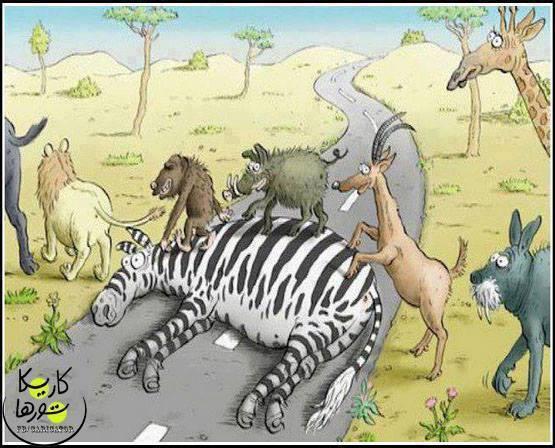 1 Zebra crossing for animals