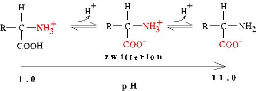 1 zwitter ions at various pH