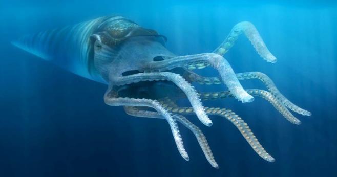 10 Cambrian fish