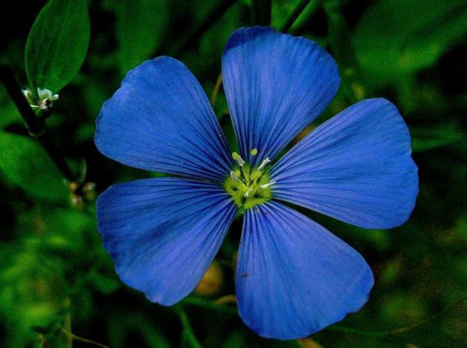 11 Blue Flower