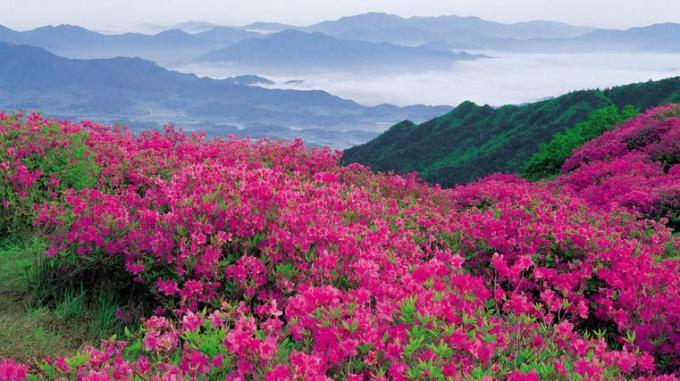 13 Pink flower valley