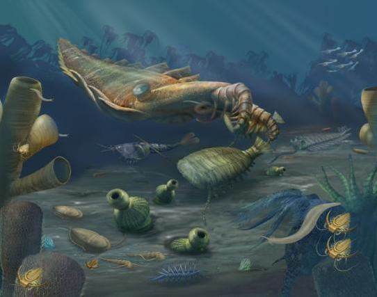 14 Cambrian Animals