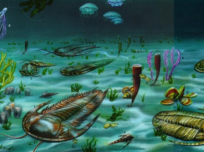 14 Paleozoic Animals