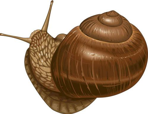 14 This is a snail
