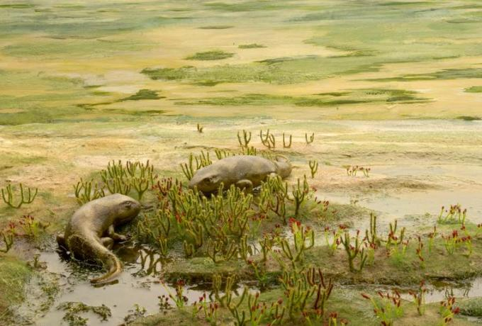 17 Silurian Animals