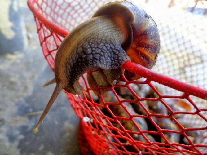 17 Snail crawling out from basket