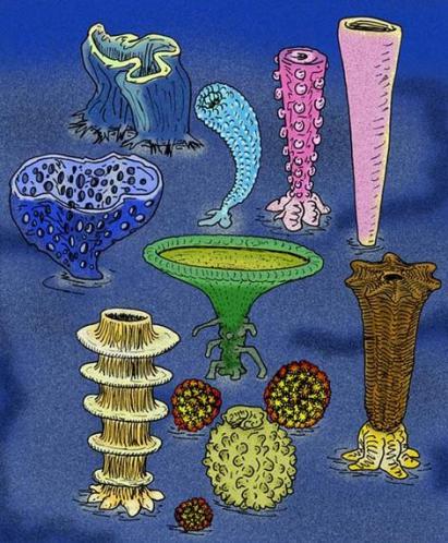 21 Cambrian Animals