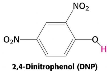 2,4 Dinitrophenol DNP