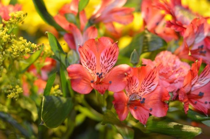 3 Beutiful pink flowers