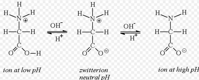 3 ion at low pH Zwitterion neutral pH ion at high pH
