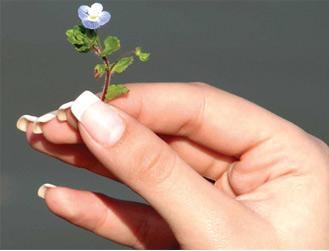 3 Nail fetish holding a small flower