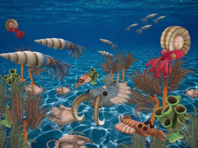 3 Proterozoic animals