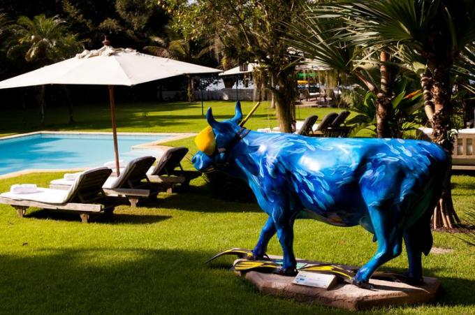 35 Atlast the Blue cow