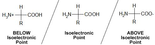 4 below isoelectric point above