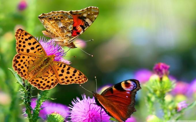 5 Butterflies on flowers
