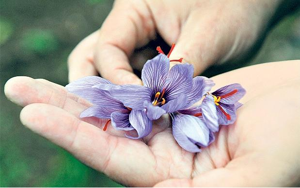 7 Saffron flower
