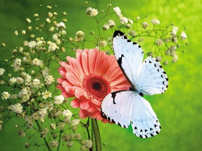 8 White Butterfly on pink flower