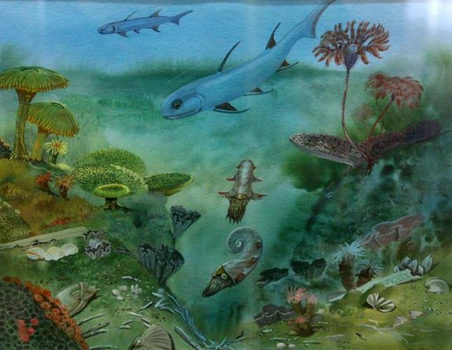 9 Cambrian fish