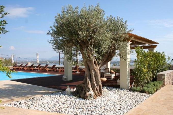 9 Dancing tree beside my villa