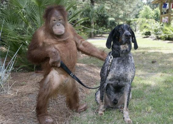 0 chimp with mongrel dog