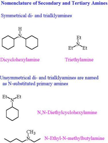15 Secondary Tertiary Amines