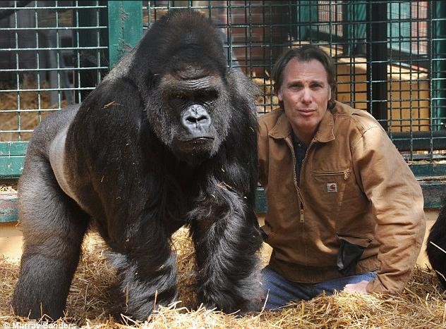 1c Cagekeeper with Gorilla